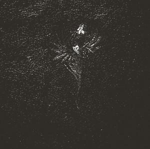 folteraar album